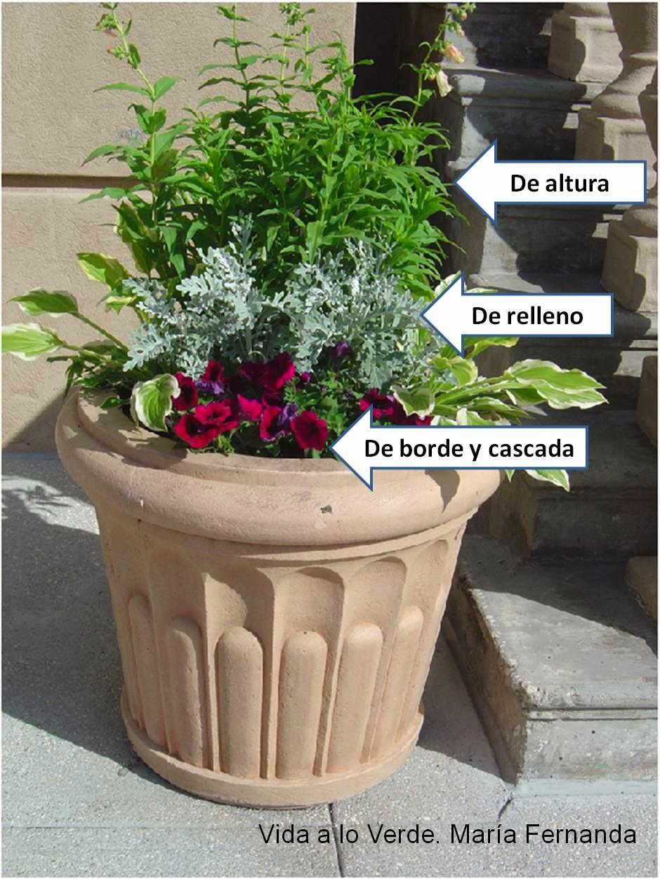 Vida a lo verde living in green escoge las plantas for Plantas para macetas grandes de exterior
