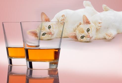 S C R A T C H Makanan Yang Merbahaya Untuk Kucing Anda