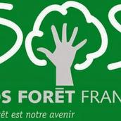 Quelle Nouvelle Loi pour nos forêts