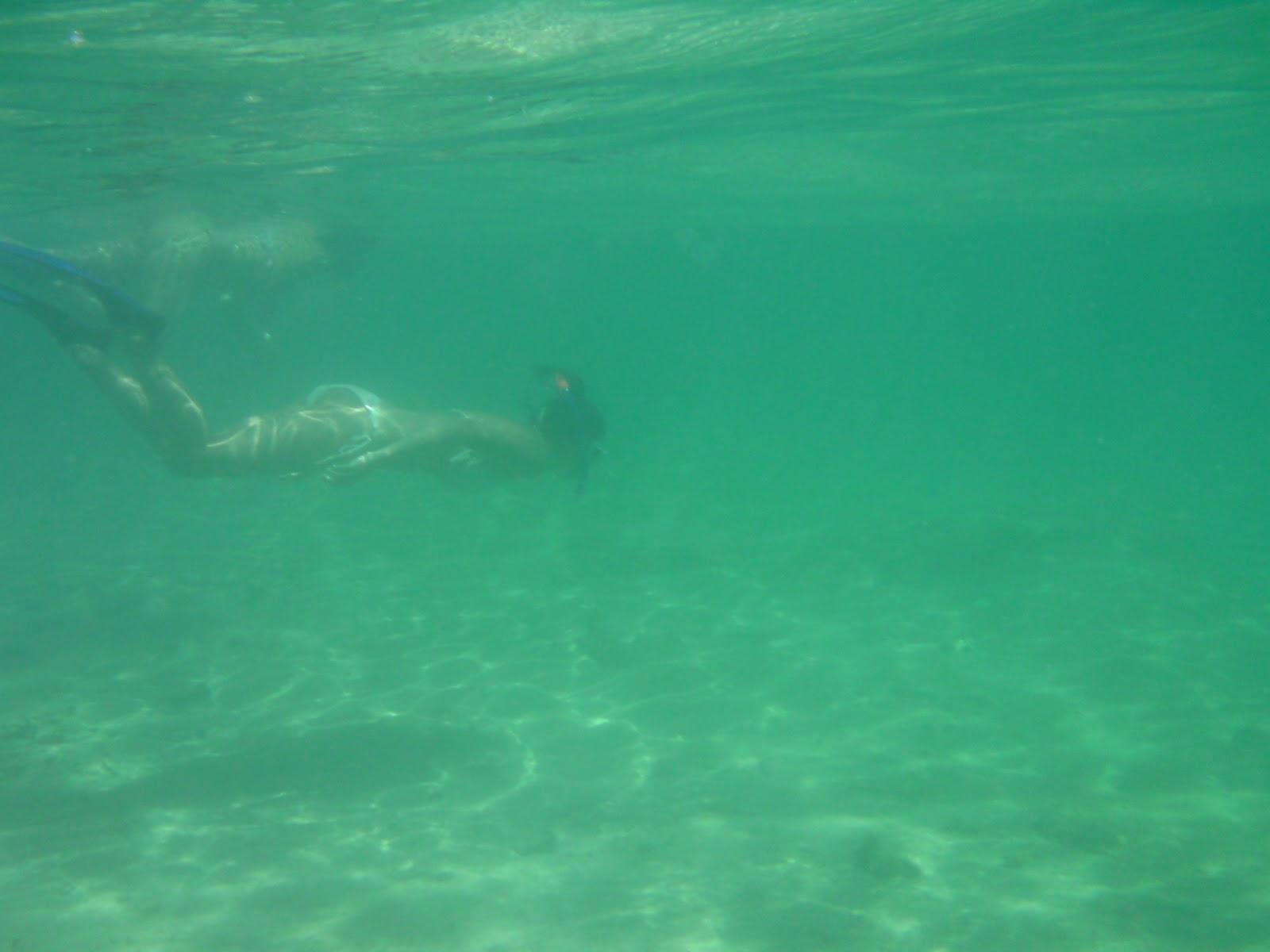 økosystemer i vand