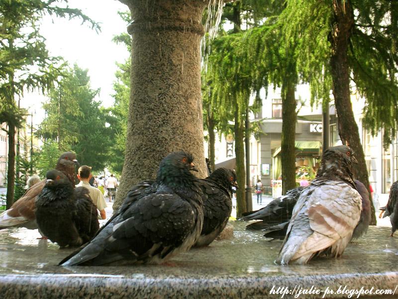6-7 Линии В.О., Санкт-Петербург, голуби, фонтан