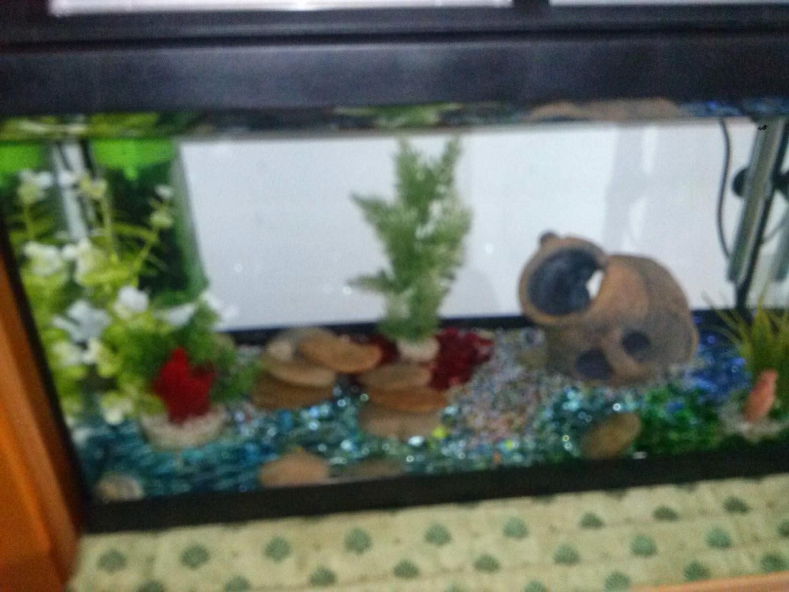 Barabao come allestire un acquario per pesci rossi for Acquario per pesci