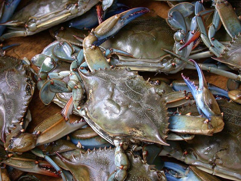Crab price
