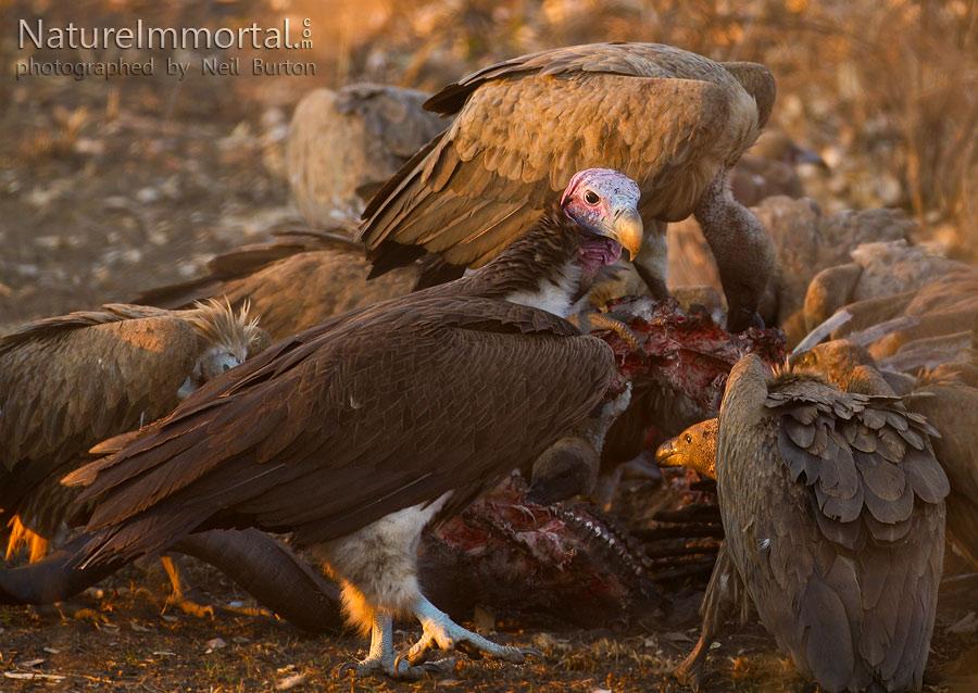 http://4.bp.blogspot.com/-Cb7LiTNNIfw/ToCTvzw1U7I/AAAAAAAAAMM/X9YoizI-qNE/s1600/boy_bird.jpg
