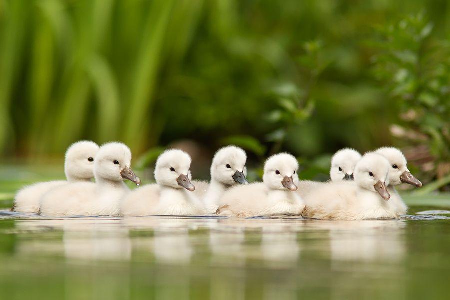 kollima.gr - Οι 20 πιο χαρτωμένες φωτογραφίες με νεογέννητα ζώα που έχετε δει..