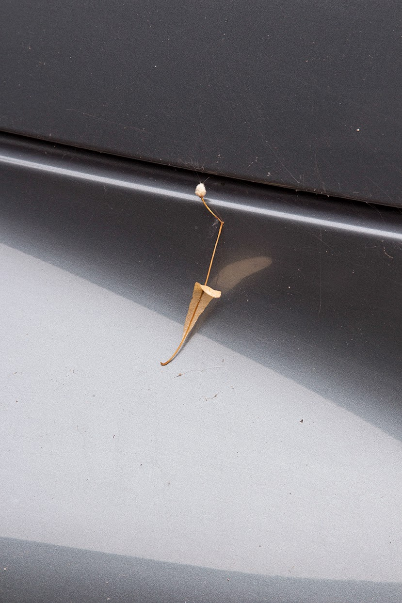 little leaf on a grey car