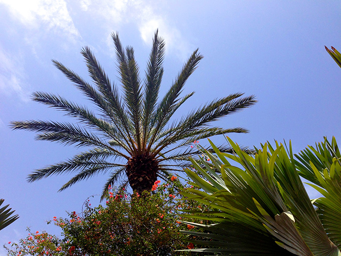 marrakech palmier
