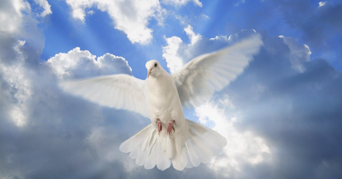 Search For Bible Truths Did The Holy Spirit Descend Like A Dove Or