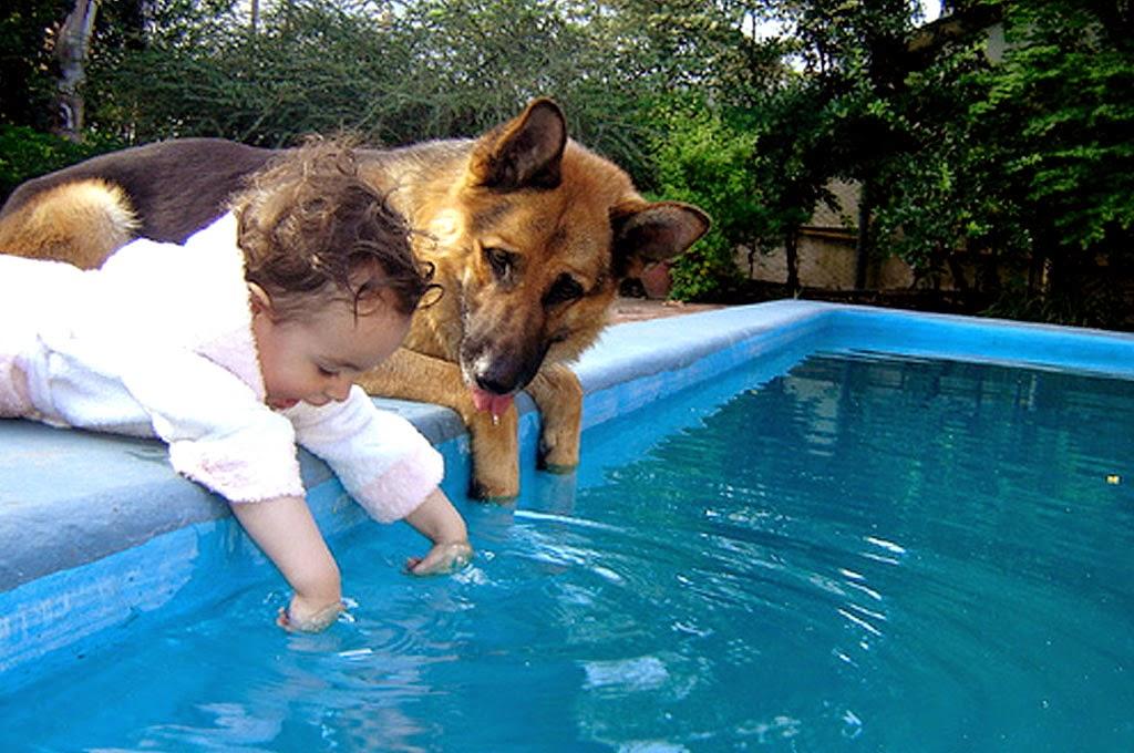 bayi-lucu-dan-anjing-bermain-di-kolam