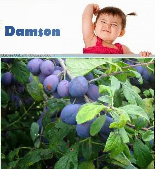 Baby Damson