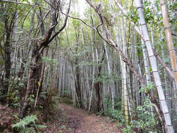 33_ Hike from Sukumo to Enkou Ji (T39)
