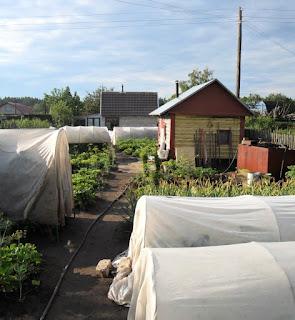 12.07. Утро. Укрытия  - это защита от ледяной ночной росы, которая вызывает множество болячек на растениях.