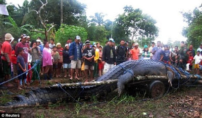 Guinness Book: maior crocodilo do mundo