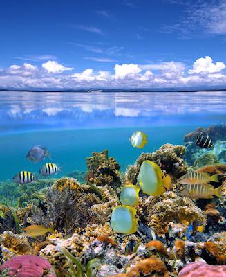 Fotografía submarina, peces, corales y arrecifes. - Fondo marino - Seascape