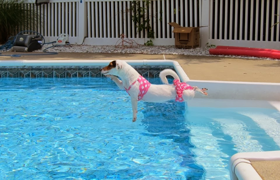 General Swimming Pool Information How To Maintain Your Vinyl Liner