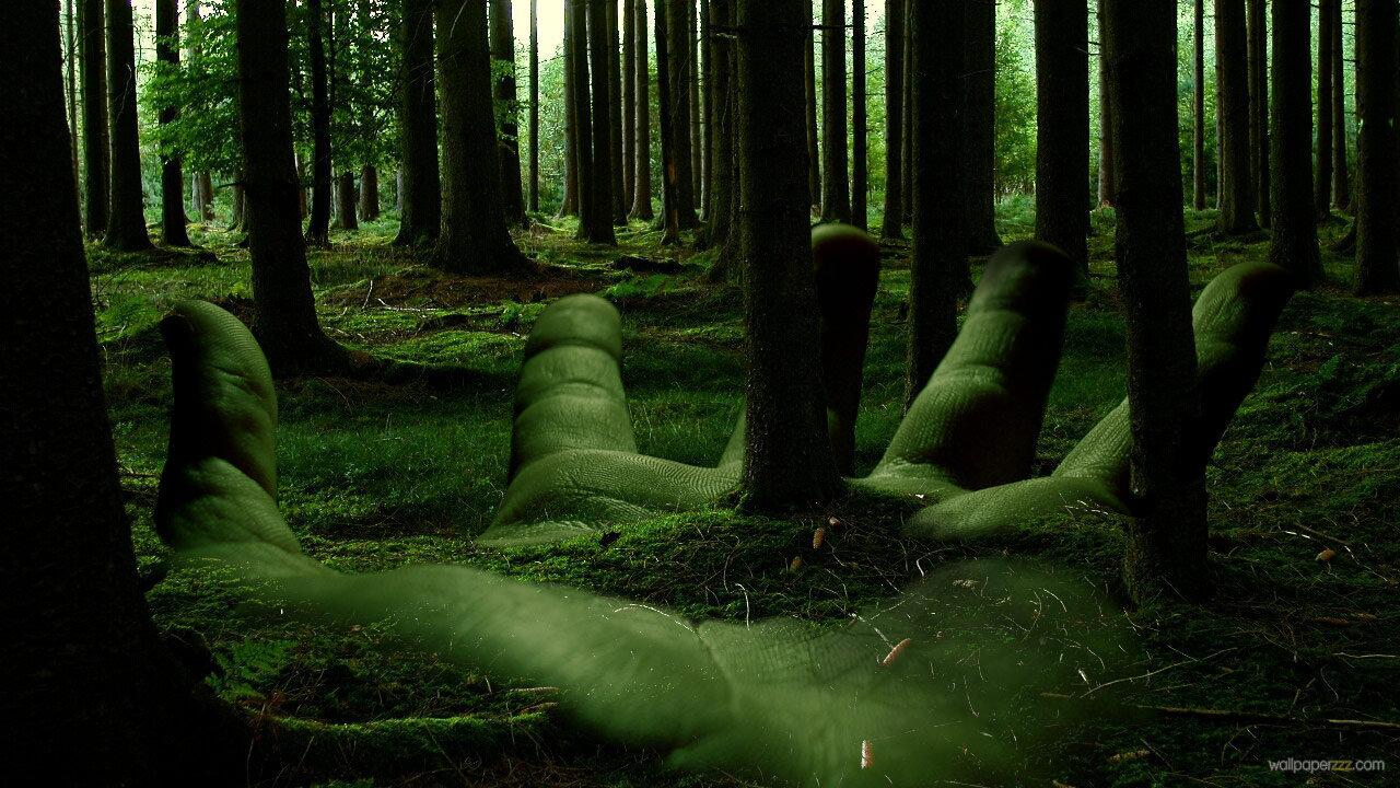 valerie kinney forest background