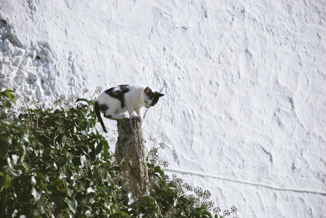 gato en Darrical