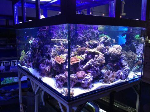 big aquarium - photo #48