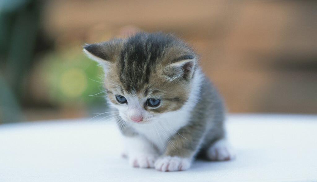 imagenes de gatos tiernos: