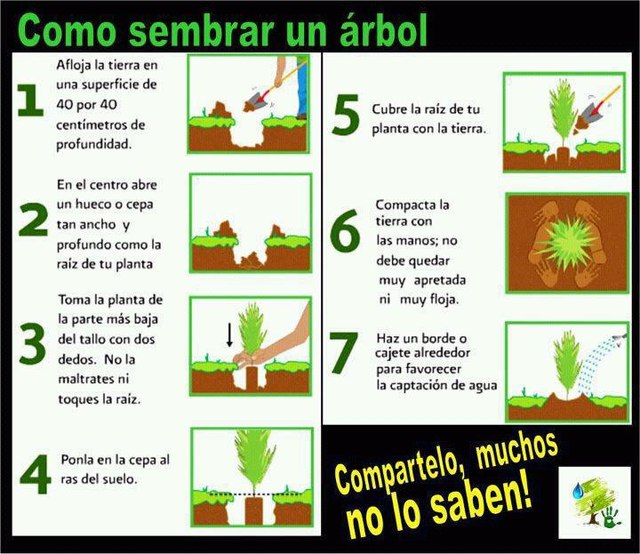Diarios de v 2 0 como sembrar un rbol en infograf a for Significado de un arbol sin hojas