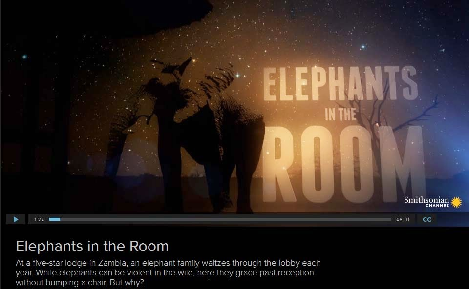 http://www.smithsonianchannel.com/sc/web/full-episodes/titles/32995/elephants-in-the-room