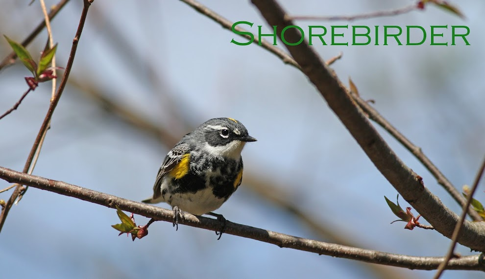 Shorebirder