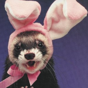 Ferret With Glasses