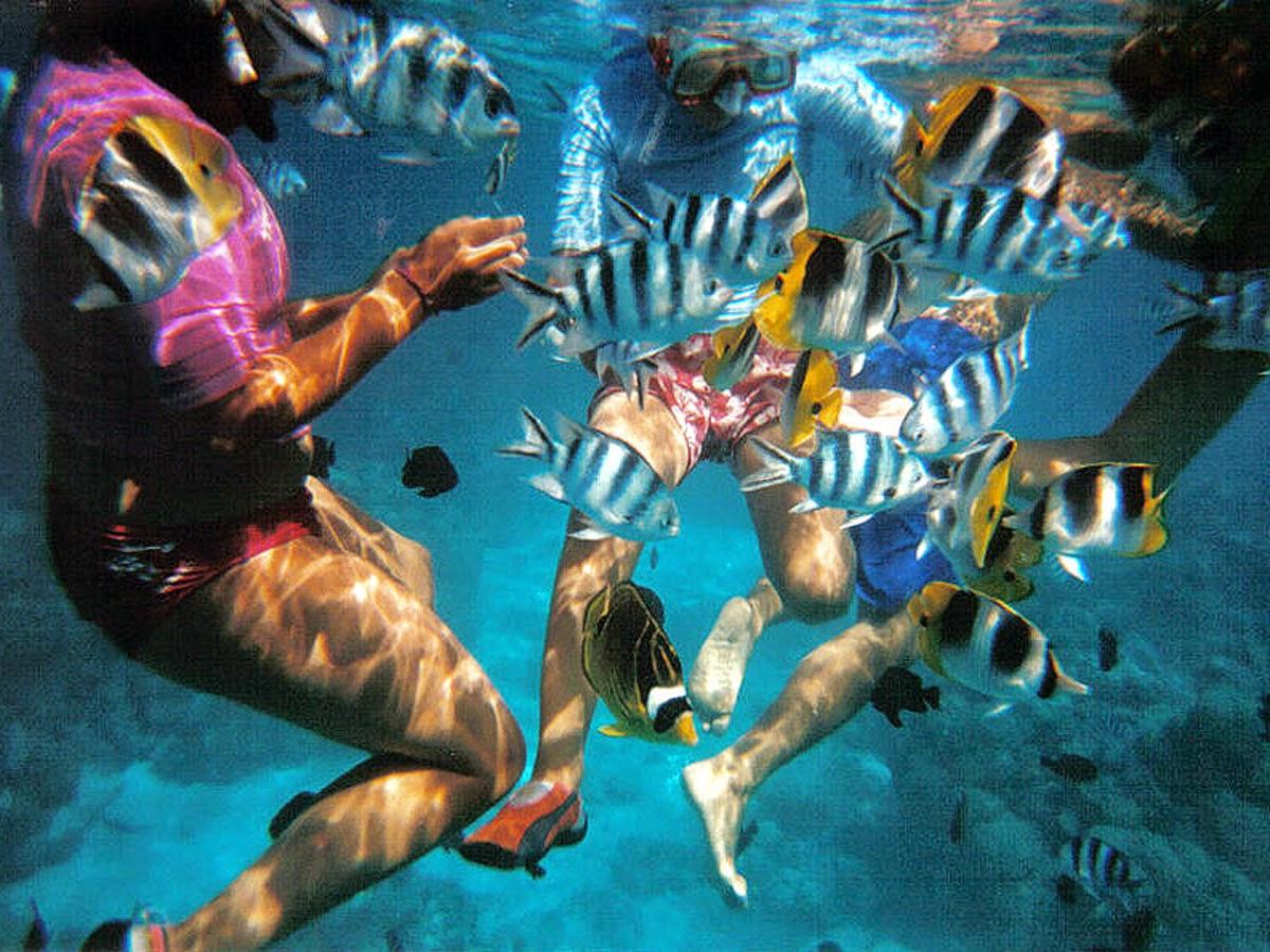 Faire de la plongée en thailande
