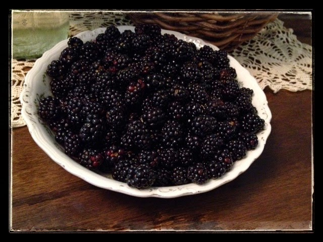 Freshly Picked Wild Blackberries