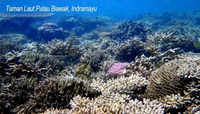 Taman Laut Pulau Biawak