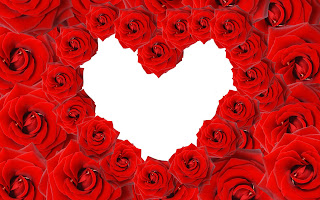 Love On Red Rose
