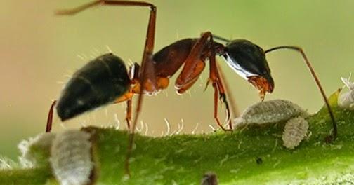 how to kill ants inside