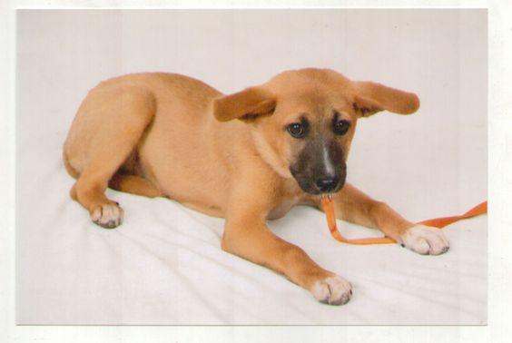 Dharma Pup