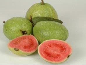 Guava Most Popular Herbal Medicines For Health