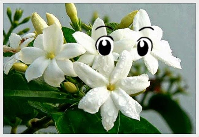 Manfaat Bunga Melati Untuk Kesehatan Mata