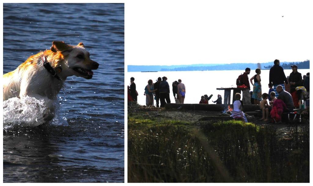 Backroads Of Bainbridge Polar Bear Swim New Year 39 S Day