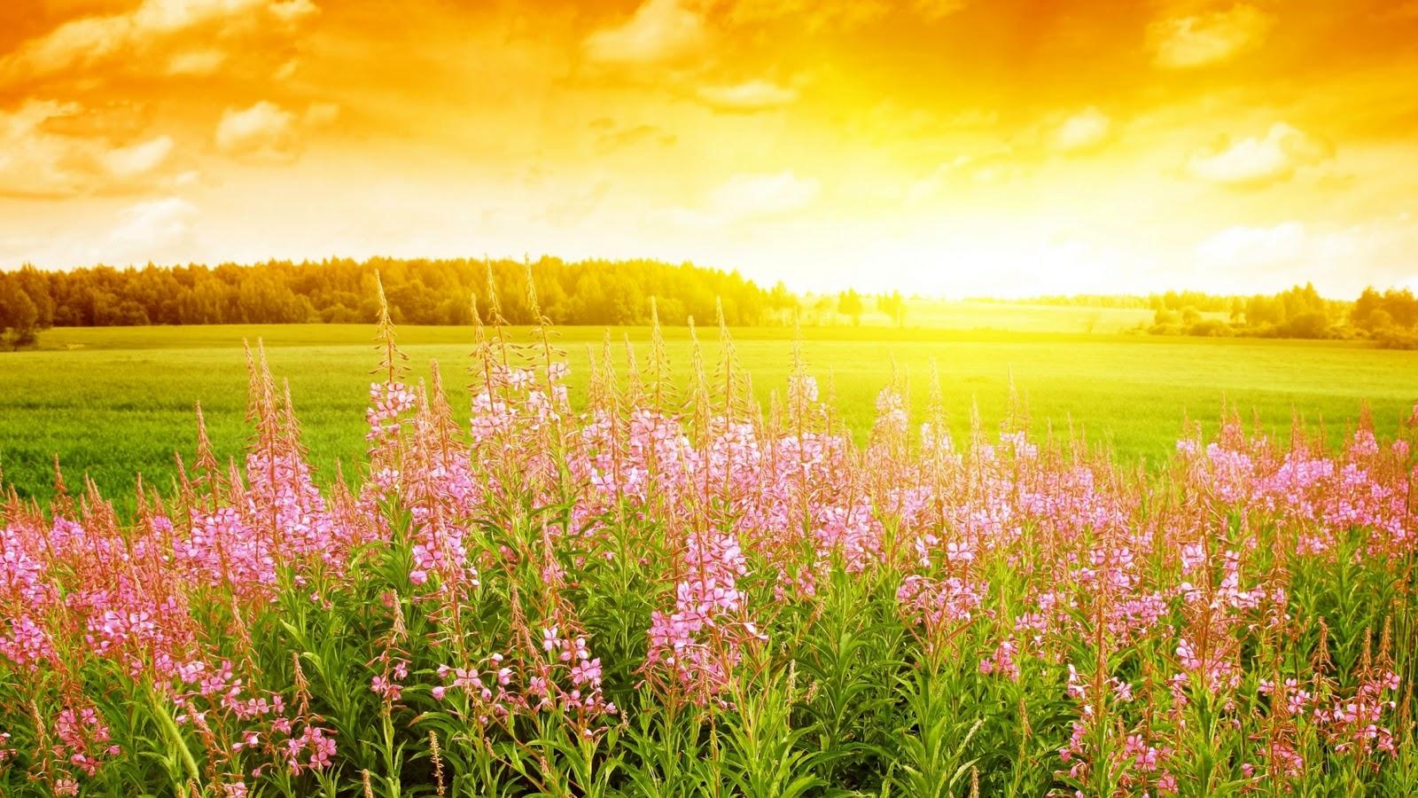 http://4.bp.blogspot.com/-ChAHieqYLpU/TnQvWeoSKbI/AAAAAAAAD20/yhUtIQpIay0/s1600/hd_summer_hd_wallpaper_hd.jpg