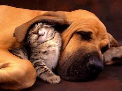 LACUA: PROTEGIENDO ANIMALES