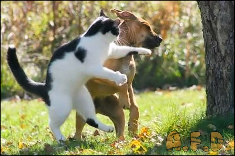 Cat slapping an old dog