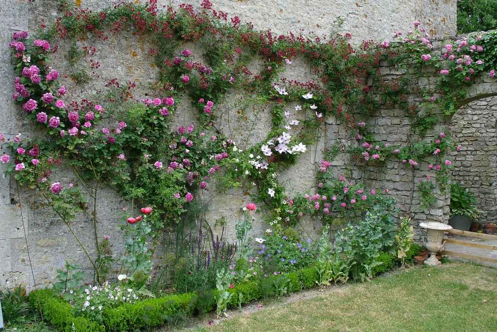 La floraison des rosiers - Plante grimpante pour facade maison ...