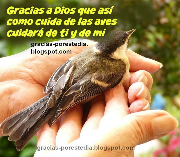 Mensaje cristiano por Mery Bracho. Gracias a Dios por este día, porque nos cuida, imagen de ave en mano, Dios cuida las aves y cuida de mí. Postal cristiana de la protección y abrigo de Dios.