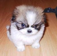 Sonhar com cachorro bravo