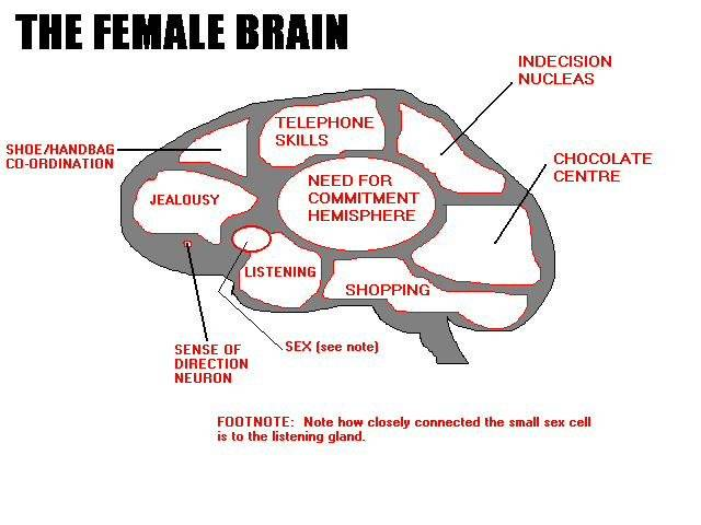 Diagram of women brain