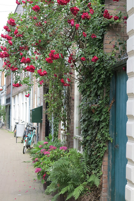 container garden, red roses, Haafner, Haarlem, urban garden
