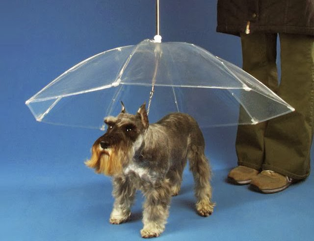 Umbrella for dogs, Canophilia