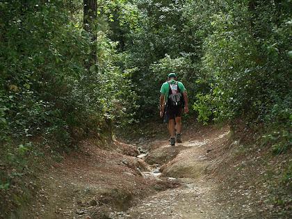 Camins aixaragallats enmig d'un bosc tupit