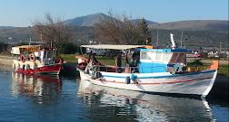 ΜΑΡΙΝΑ ΙΤΕΑΣ - Αλκυονίδες