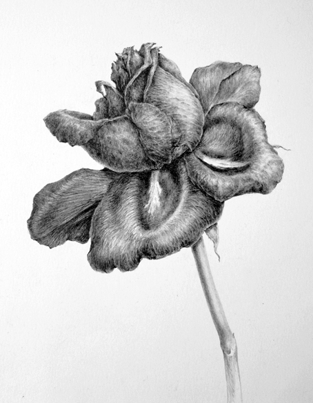 Amazing Observational Drawings