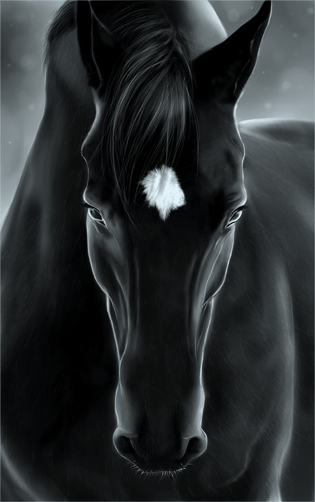 Las Fotos Mas Alucinantes: caballo negro - photo#45