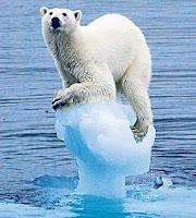 Polar bear annoyed by fibre sceptics